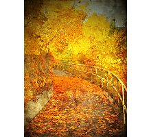 The Autumn Curve Photographic Print