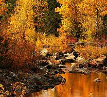 Sierra Gold by Barbara  Brown