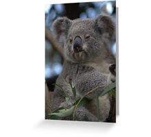Blinky Bill Greeting Card