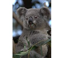 Blinky Bill Photographic Print