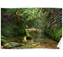 Coachwood Glen - Megalong Valley NSW Poster