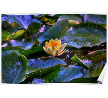 Monets water lilies Poster