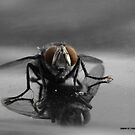 Just a Random Fly that landed in front of my Rebel SLR by Daniel  Oyvetsky