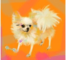 Dog Chihuahua Orange Photographic Print