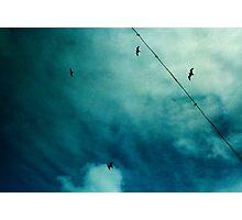 four little birds Photographic Print