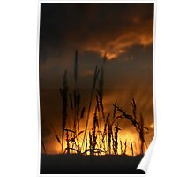 Sunset in the field. Poster