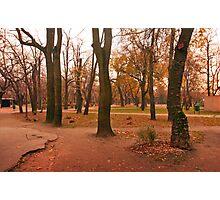 Tree trinity. Photographic Print