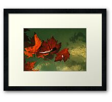 five red leaves Framed Print