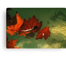 five red leaves Canvas Print