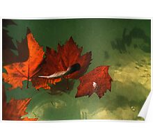 five red leaves Poster