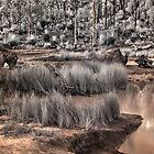 forest in infrared by BigAndRed