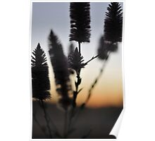 Mulla Mulla Sunset -Wittenoom  Poster