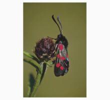 5 Spot Burnet Moth Kids Clothes