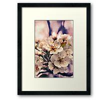 Blossoms at Dusk  Framed Print