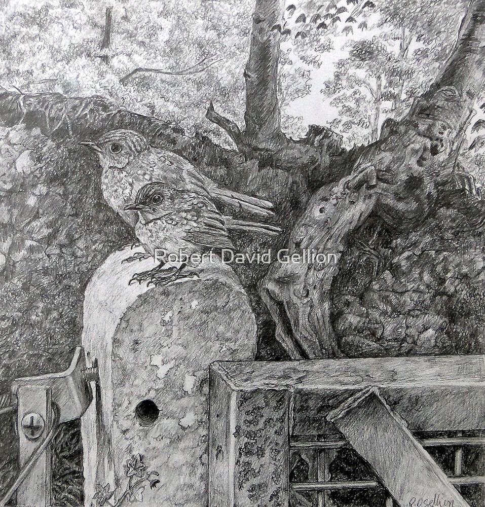 Chicks by Robert David Gellion