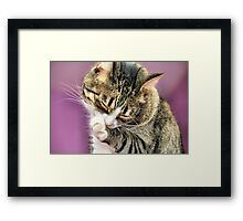 Cleaning Time.... Framed Print