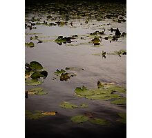 Lilly Life Photographic Print