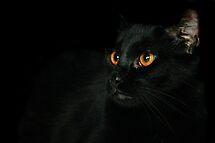 Halloween Bill by Susanne Correa