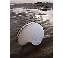 Paper Nautilus Shell Photographic Print