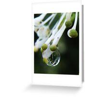 White Wings Grevillea rain drops! Greeting Card