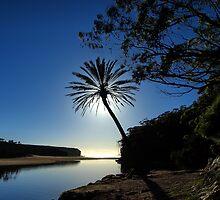 Wattamolla Palm by Malcolm Katon