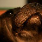 Seal by terrebo