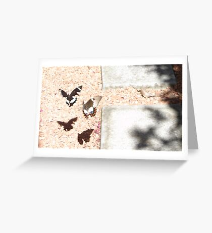 Beaut Butterflies Greeting Card
