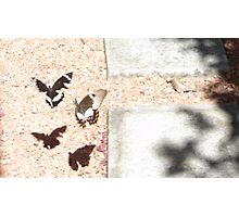 Beaut Butterflies Photographic Print