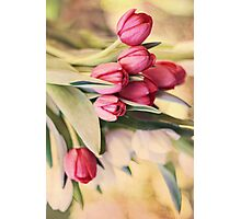Vintage Tulips Photographic Print