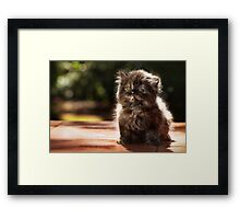 ...and whiskers on kittens... Framed Print