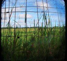 Through the Viewfinder and Fence by Barbara Morrison