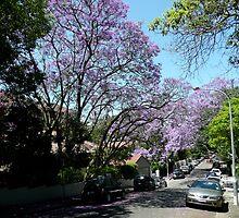 Jacaranda (Holt St, Double Bay) by Taylor Tran