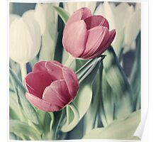 Twin Tulips in Pastel Pink Poster
