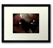 Who You Calling a Chicken? Framed Print