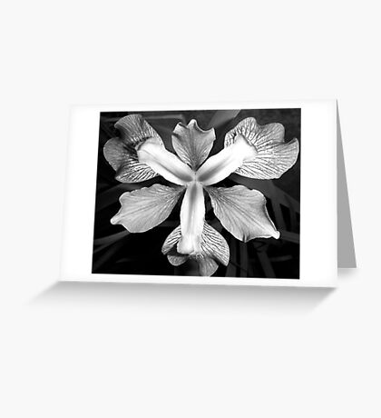 Iris. Greeting Card