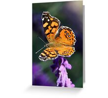 Butterfly, West Coast Lady Greeting Card