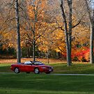 Cruising Through The Park by kkphoto1