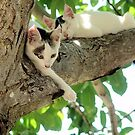Kittens In Our Walnut Tree by Francis Drake