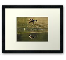 Waxwing Helicopter Framed Print