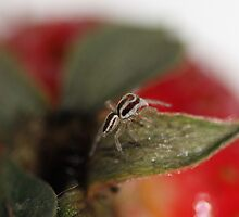 Strawberry Spider by Nathan Dooley