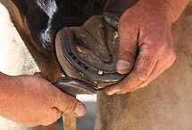 Hands of a farrier 4 by Samantha Bailey