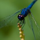 Blue dragonfly by thousandsmile