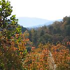 Smoky Mountain View - Rocky Top Tennessee by JeffeeArt4u