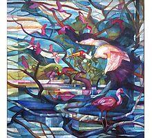 ibis Photographic Print