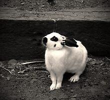 little rabbit by Louise LeGresley