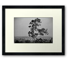 A Giant Above The Rest - Eucalyptus Tree Framed Print