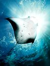 Sun Diver - Manta by Henry Jager