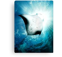 Sun Diver - Manta Canvas Print