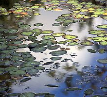 Lily Pad Pond by Martina Fagan