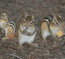 Chipmunks 3 in 1 by Wanda-Lynn